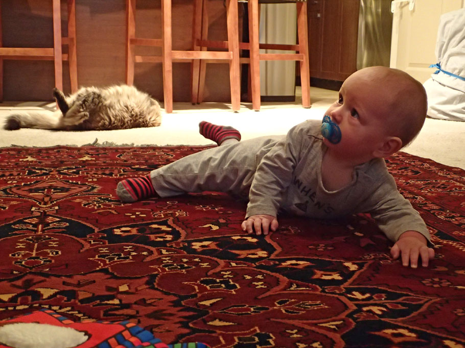 Before we returned to Florida we did one more round of visiting friends and family. Here baby Gabriel is working on his mobility. Maybe soon he will be up for longer travels with us someday!