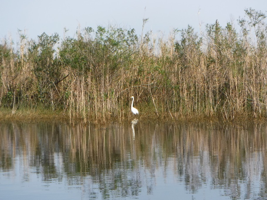 Bird on the Caloosahatchee River.