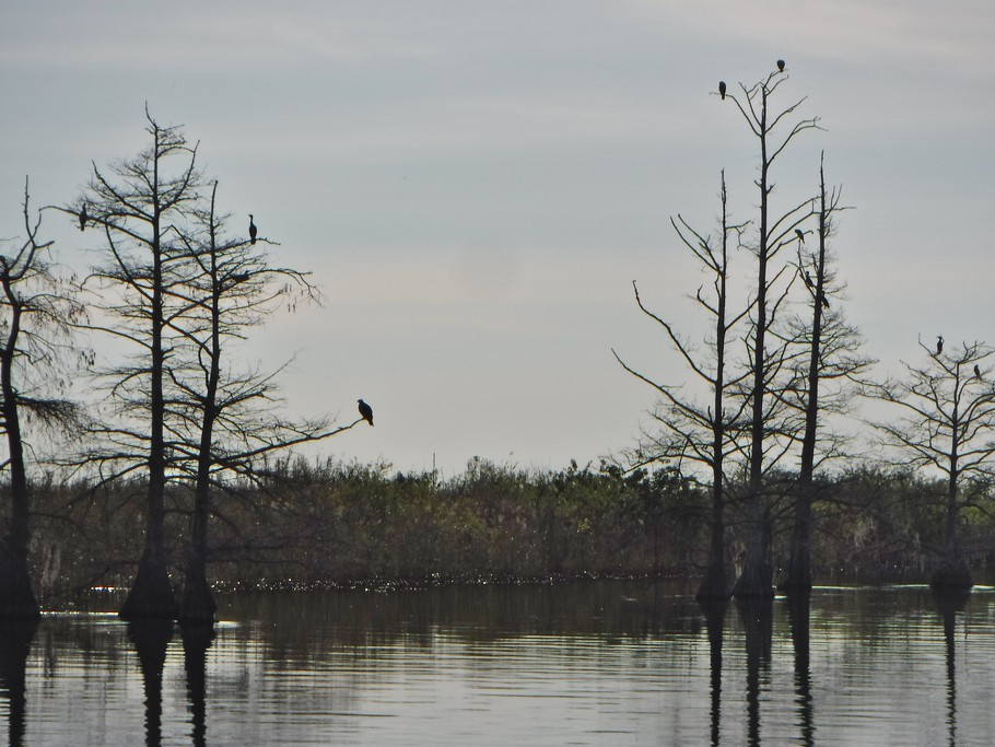 Trees, birds, water, sky.