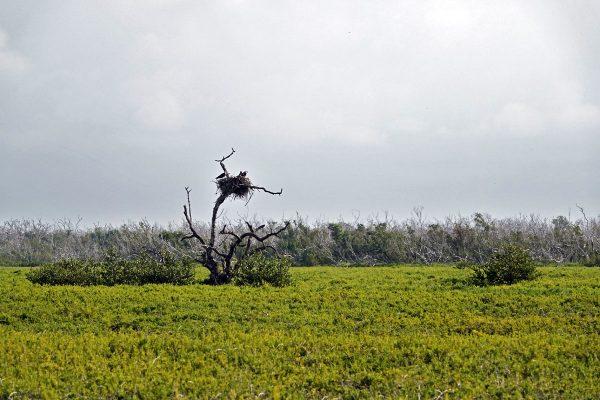Osprey nest along the Prairie Trail.